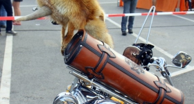 140704_hamburg_harley_days_059
